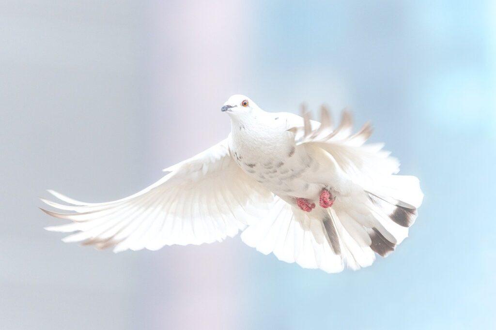 senso di libertà
